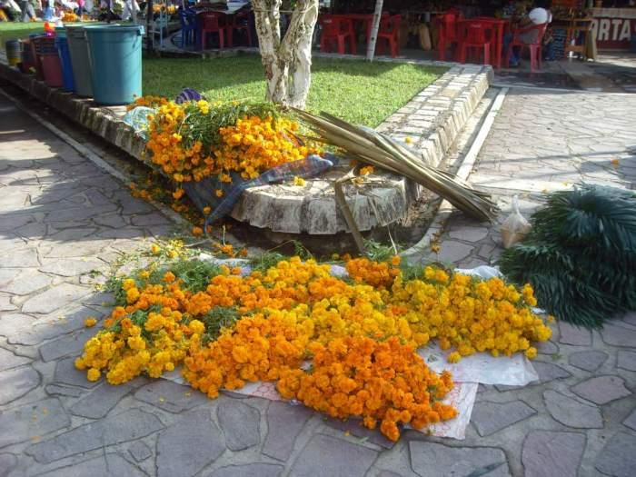 Blumenernte für den Día de los Muertos