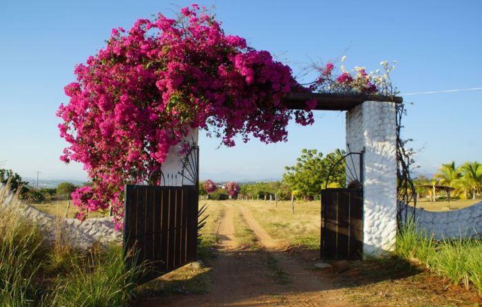 Don Pedros Ranch