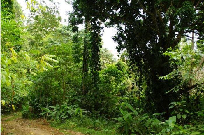 Costa Rica 10 Puerto Viejo Dschungel