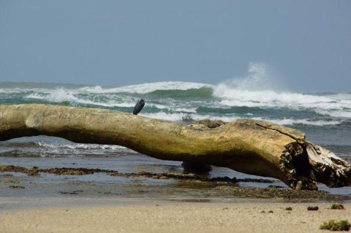 Costa Rica 8 Strand bei Puerto Viejo