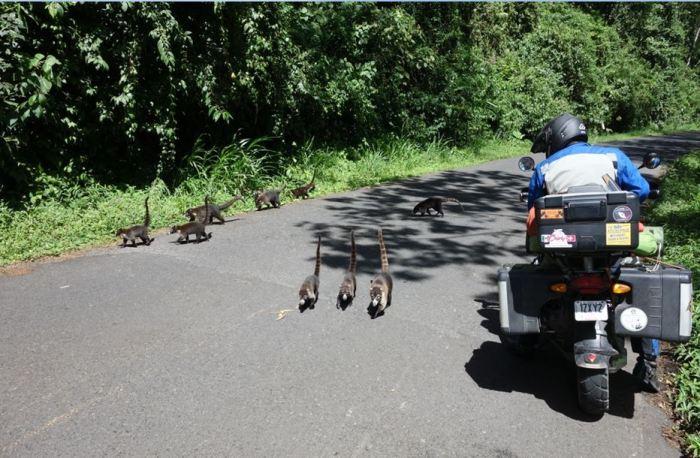 Costa Rica - tierischer Verkehr