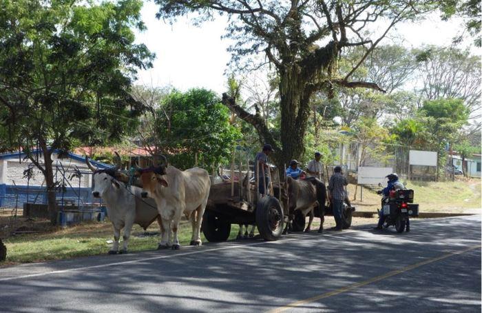 Ochsengespann Nicaragua