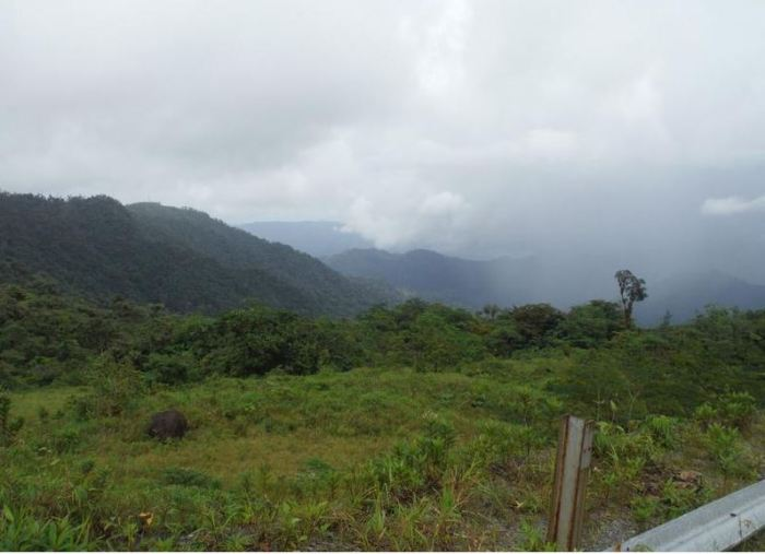 Panama 7 durch den Nebelwald
