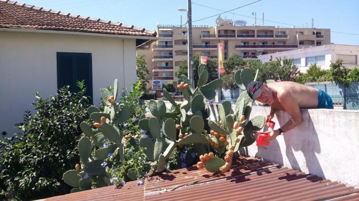 die süssesten Früchte findet man in Nachbars....