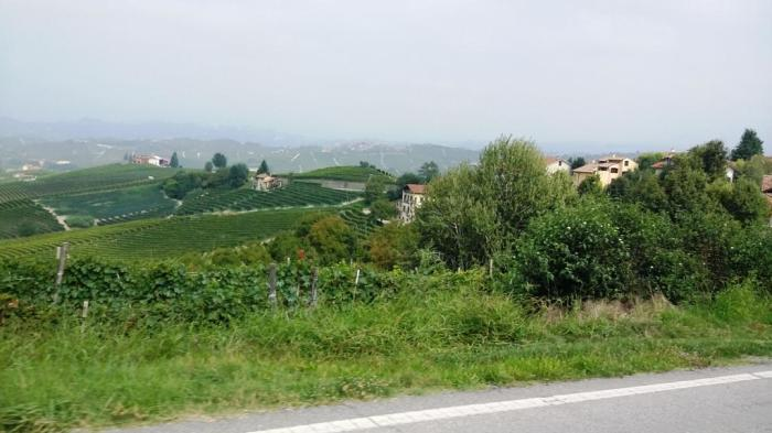 Weinanbau soweit das Auge reicht
