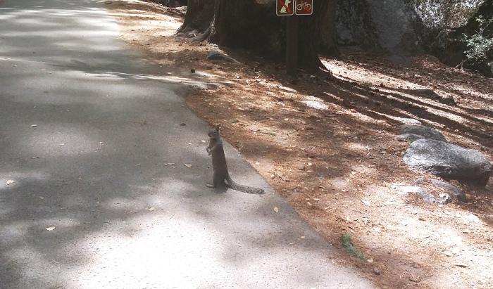 bettelndes Eichhörnchen