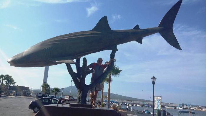 Walhai mit Wal
